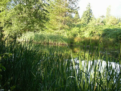 Pond at Worthington Park in Quilcene